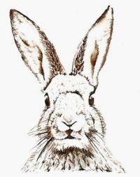 BunnyNest